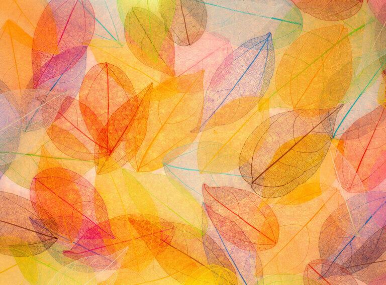 Jókai Klub-Virányos | őszi műsorfüzet